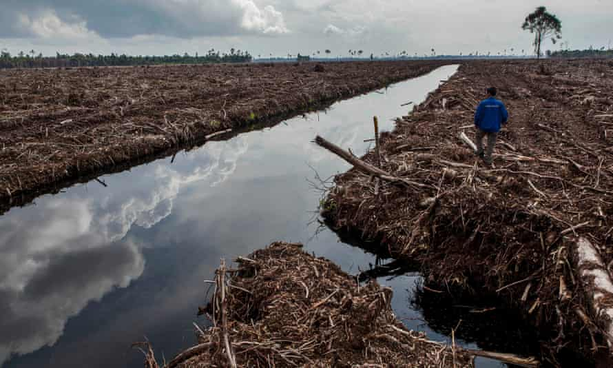A forest activist inspects land clearing and drainage of peat natural forest Sumatra, Indonesia