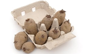 Window boxes: 'egg cartons of shrivelled-looking spuds' ready for chitting.