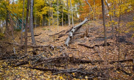 Toronto's ravines are 30 times the size of New York's Central Park.