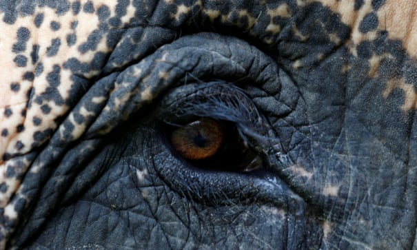 Elephants on the path to extinction - the facts