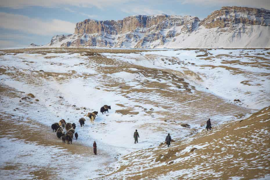 A yak caravan winds its way up and down the steep valleys