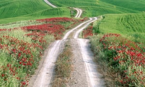 Common sainfoin lines a country lane in Tuscany