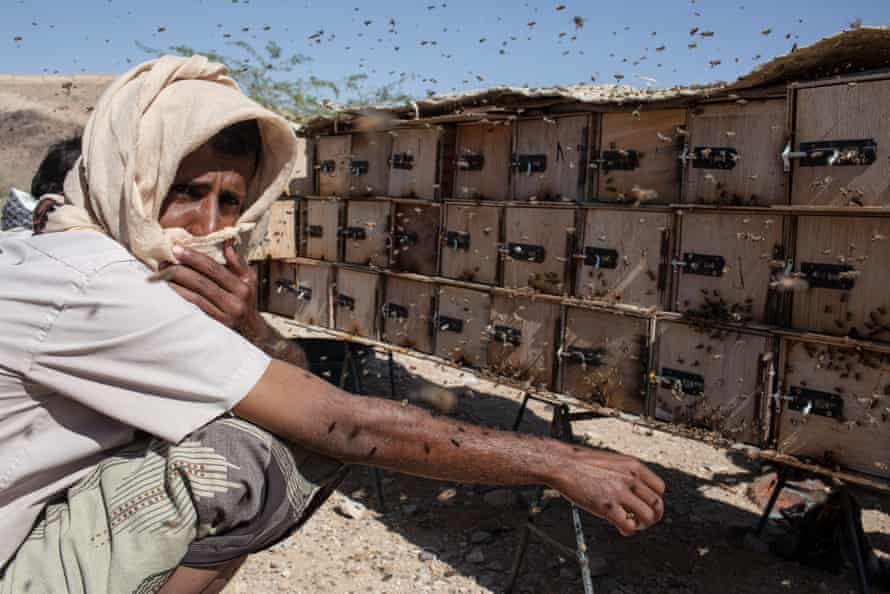 Adel Saleh Saber, 28, collects honeycomb from hives just outside Ataq