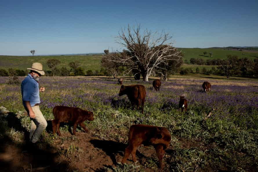 'This way grass gets to express its grassness'. Arnott checks on cattle on his 2,143 hectare property.
