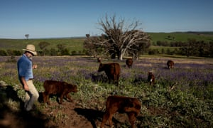 Charlie Arnott checks on cattle on his 2,143 hectare property