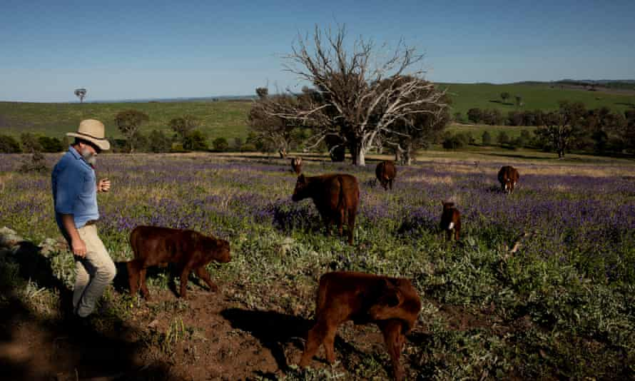 Farm with cattle Australia