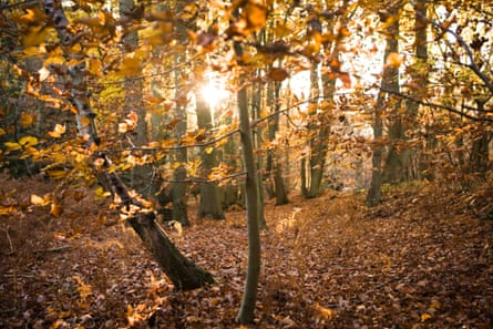 Woodland in Kent. Trees risk being 'neglected, undervalued and forgotten,' campaigners say.