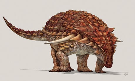 Heavily armoured dinosaur had ginger camouflage to deter predators – study