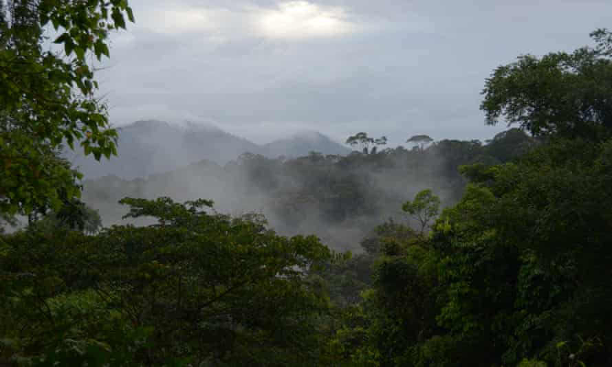 This corner of the Amazon is awaiting a decision by the French government over the development of a controversial open-pit gold mine that would be the country's largest.