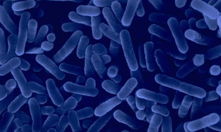 Scanning electron micrograph of Legionella pneumophila bacteria which causes Legionnaire's disease.
