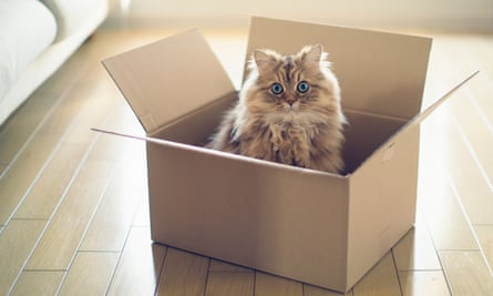 In Schrödinger's 1935 thought experiment, a cat found itself in a closed box with a small radioactive source, a Geiger counter, a hammer and a small bottle of poison.