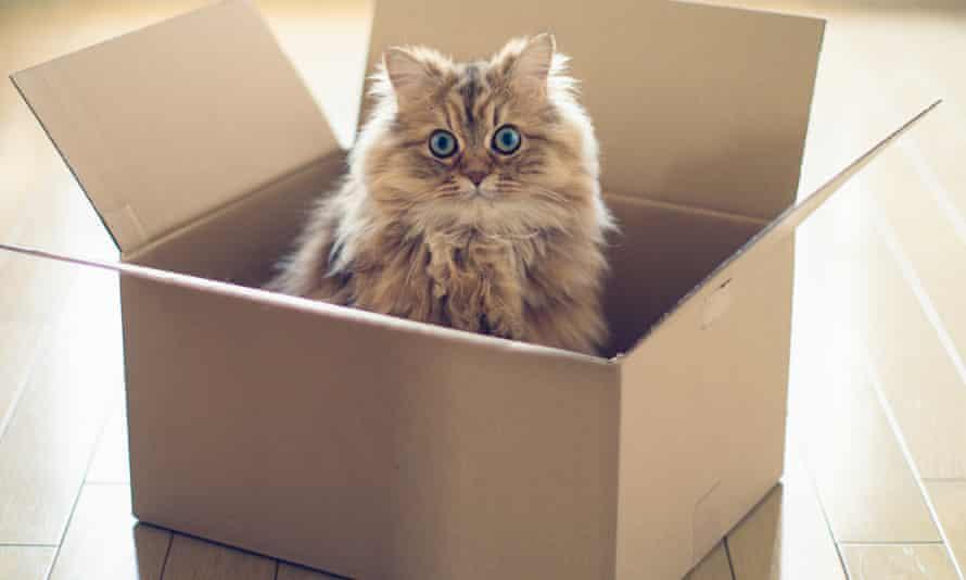This was a Schrödinger's cat of a puzzle.