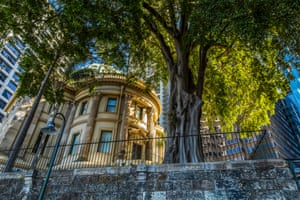 Brisbane Street Tree
