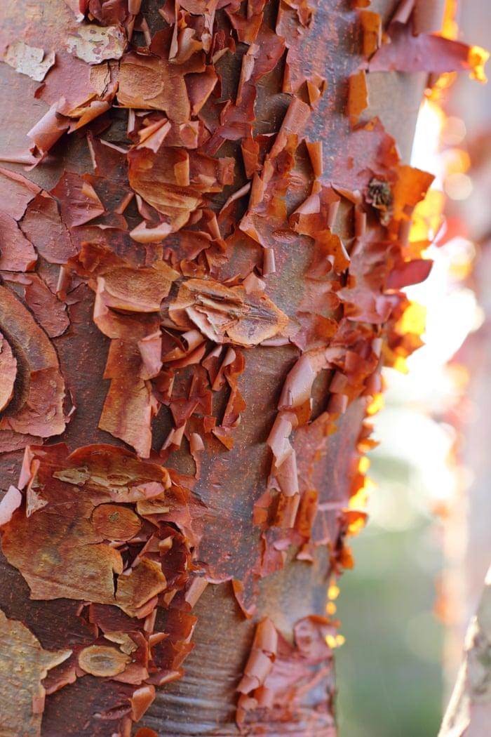 Ornamentally Barking Up The Right Tree James Wong Life