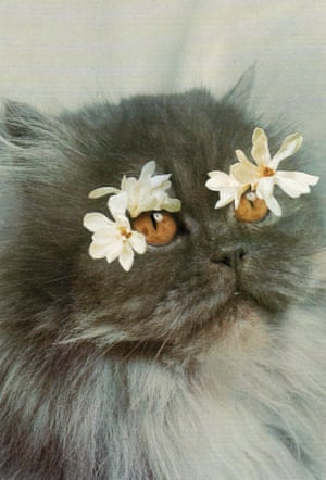 A collage of a cat with flower eyelashes by Stephen Eichhorn