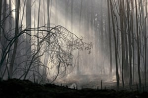 Shafts of light fall through burnt trees the morning after a forest fire in Naron, Spain