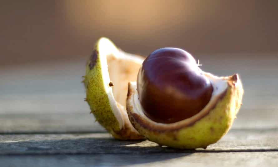 Conkers ... contain natural detergent.