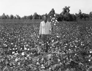 Portrait in a Cotton Field, n.d.