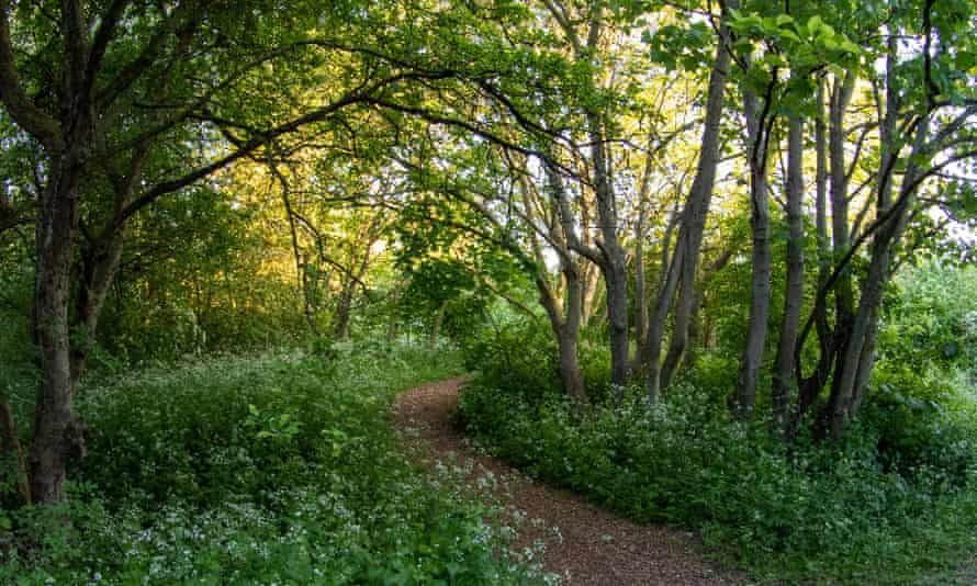 St Nick's nature reserve in York