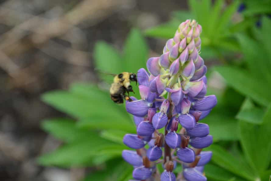 Bees and other pollinators are vital to food production but are in decline