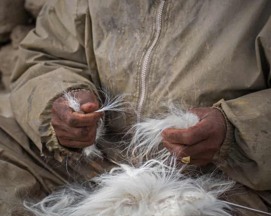 A herder undertakes the time-consuming job of separating the corse outer hair from the finer, softer undercoat.