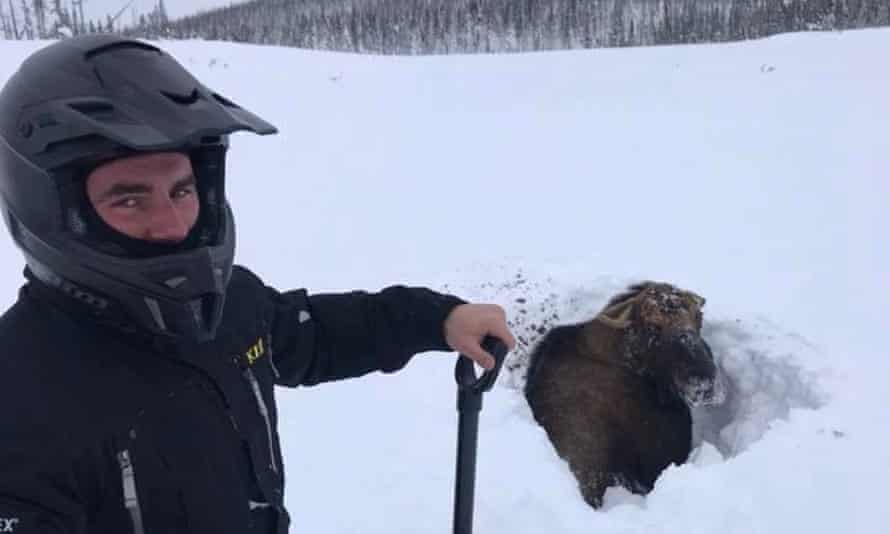 The snowmobilers came upon the moose in western Newfoundland.