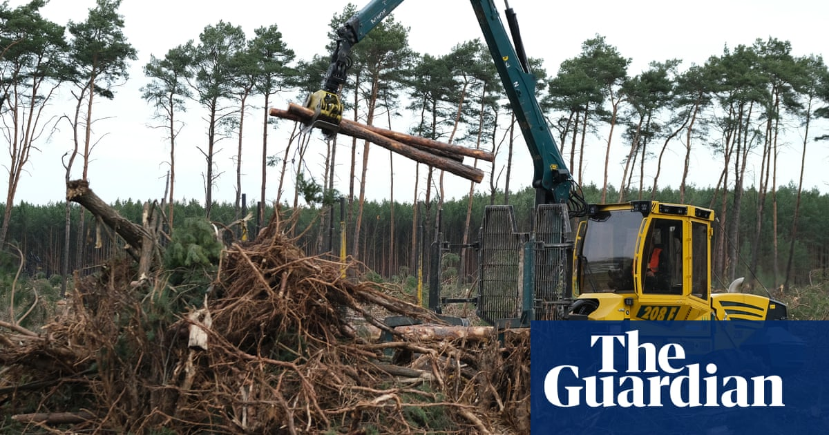 Climate crisis is making world's forests shorter and younger – study