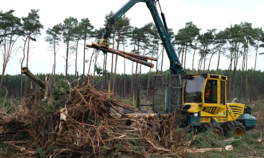 Trees being cleared from a forest