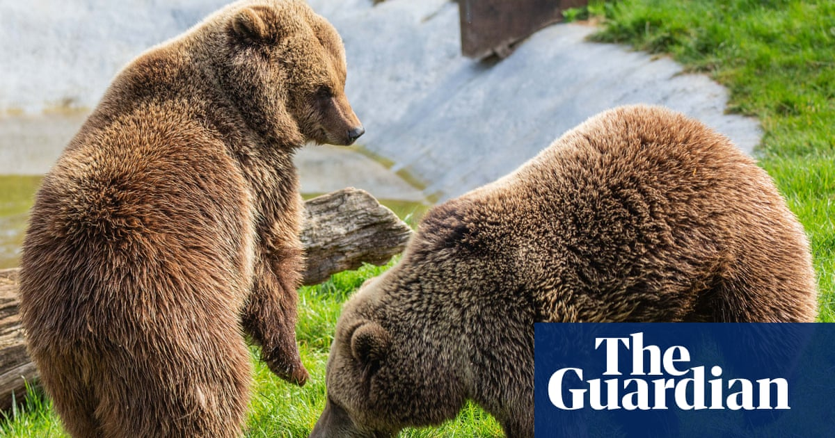 Two bears shot at Whipsnade Zoo after escaping from enclosure