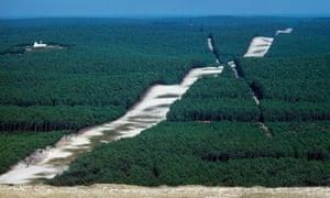 Landes forest, Landes de Gascogne, Aquitaine, France.