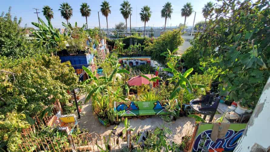 'Gangsta garden' in LA