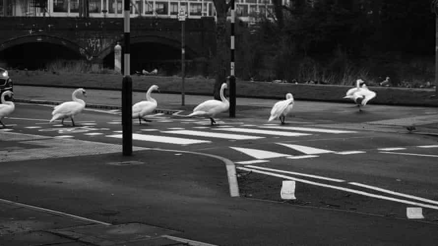 No pelicans at the crossing so far ...