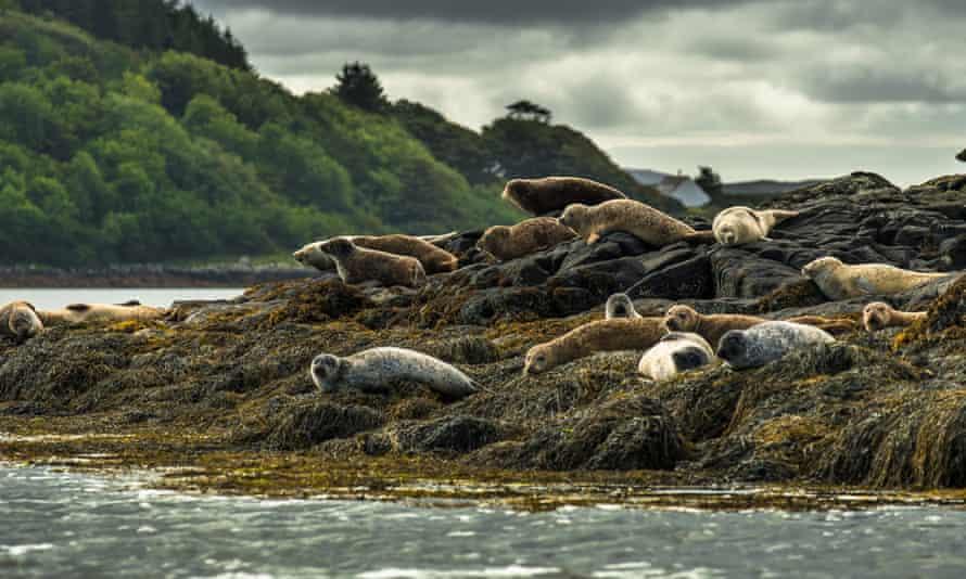 Seals on the Isle of Skye in Scotland