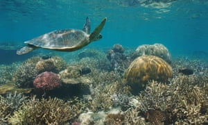Beautiful coral reef with a green sea turtle