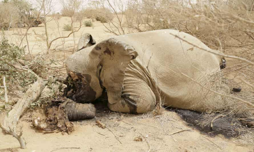 A slaughtered elephant is seen in Bambara-Maoude, Mali, 10 June 2015