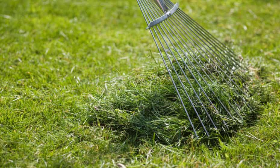 Raking up grass clippings