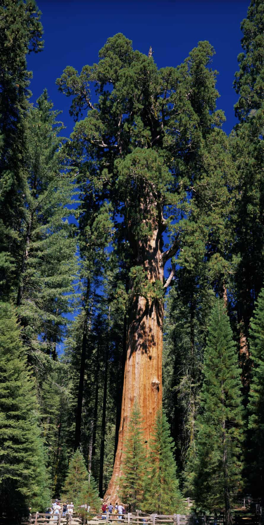 The KNP Complex fire is burning within a mile of the iconic General Sherman tree, shown here in 2015.
