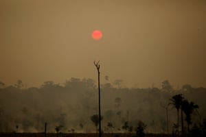 Rondônia, Brazil: A view of a deforested area at the National Forest Bom Futuro in Rio Pardo