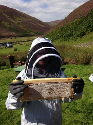 'Suzie Millar of The Scottish Bee Company. A frame of heather honey from Dumfries & Galloway.'