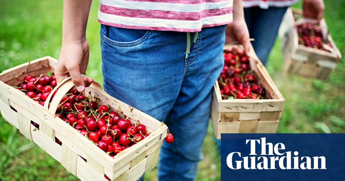 'It's very moreish!': readers' delicious cherry recipes, from frozen margaritas to strudel