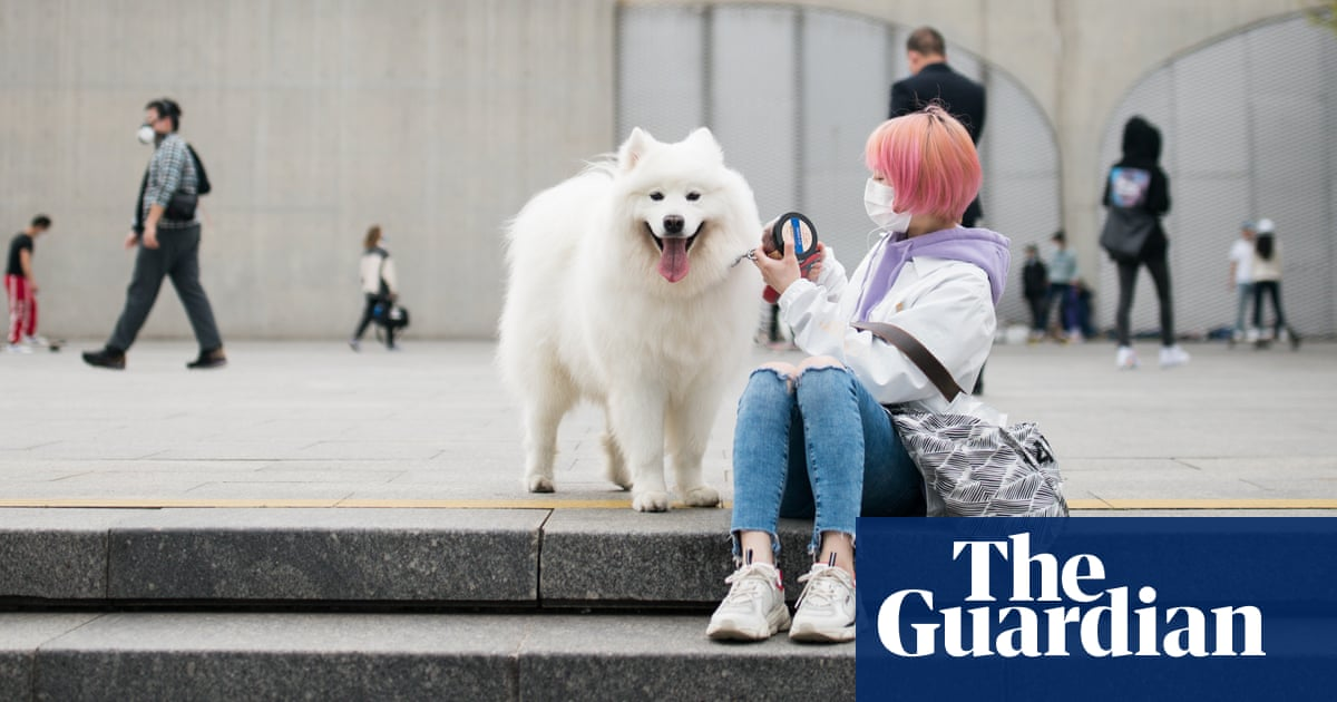 Chinese county reconsiders threat to ban dog walking after backlash