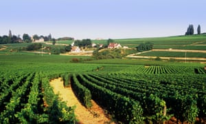View of the vineyards in the wine-making region of Burgundy, France