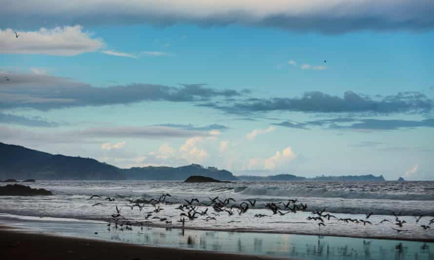 Gulls fly at Ocean Beach, near the Whangārei Heads