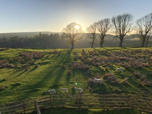 By Laura Ashe. Northumberland in early May. I spent hours watching the sheep and lambs moving across the field in (unexpected) sunshine. At this moment, the sinking sun, the trees, the grass and the lambs all met.