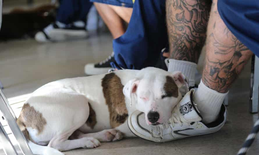 Four-legged friends: a sleeping hound nuzzles up to the feet of its trainer