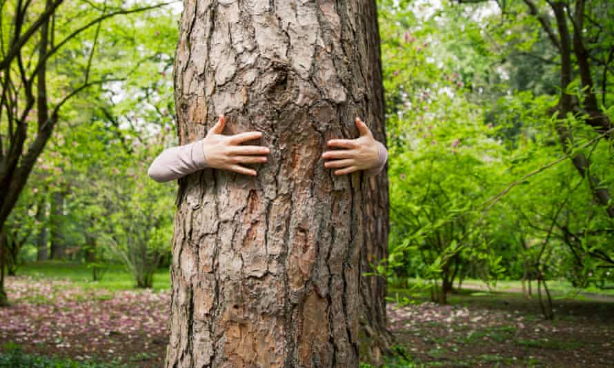 Iceland has recommended hugging trees instead of people