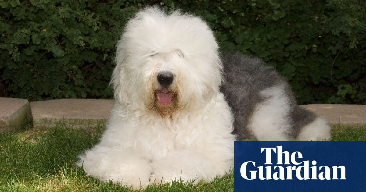 Why it's time to stop buying pedigree dogs