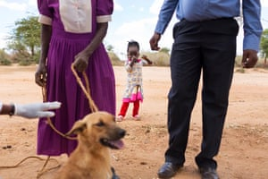A little girl looks on as a dog is vaccinated