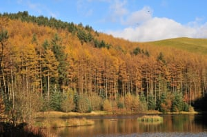 Larch woodland in the Cambrian mountains – now felled.