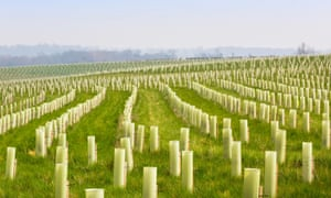 Tree planting  in the National Forest, Burton-on-Trent